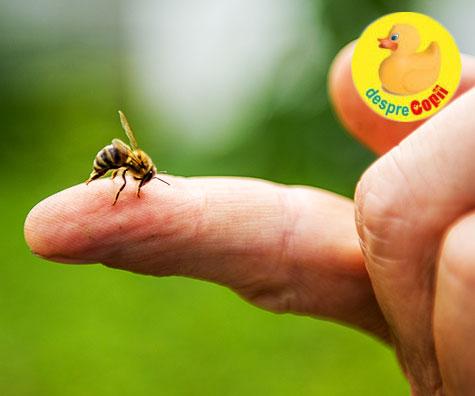 Intepatura de albina ssu viespe: iata ce e de facut si ce riscuri sunt