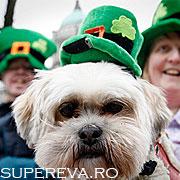 10 motive sa vizitezi Irlanda