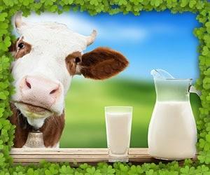 Este laptele un aliment sanatos sau nu?