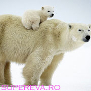 Dragostea unei mame in imagini