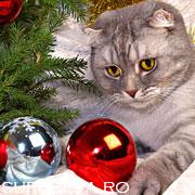 27 de pisici care sarbatoresc Craciunul cu stil