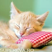 Pisicutele chiar dorm in orice loc!