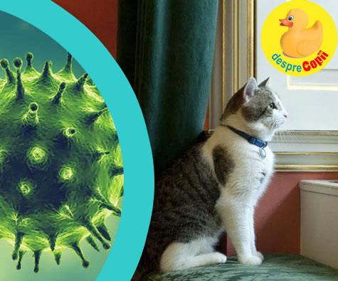 Pisica si cainile intra si ei in carantina? Trebuie sa ii dezinfectam? Iata care sunt recomandarile specialistilor