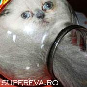 Pisicile care au regretat ca au fost curioase