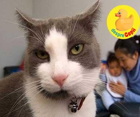 Cand pisica e geloasa pe noul nascut - avem aceste situatii