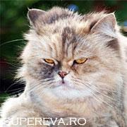 Cea mai eleganta si educata pisica din lume