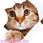 Pisicile contribuie la raspandirea cancerului la creier