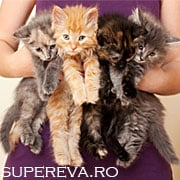 12 Fapte uimitoare despre pisica ta