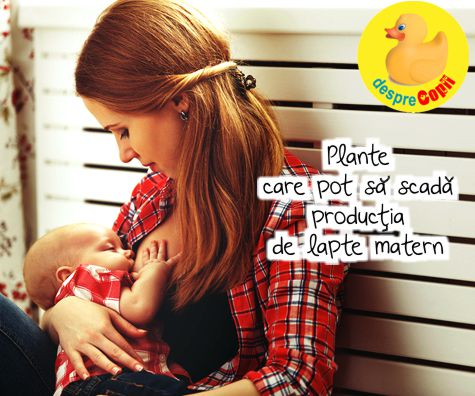 Plante care pot sa scada productia de lapte matern