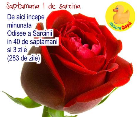 Saptamana 1 de sarcina