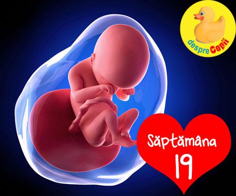 Eveniment in saptamana 19 de sarcina. Bebe incepe sa auda - acum poti vorbi cu bebelusul si ii poti canta