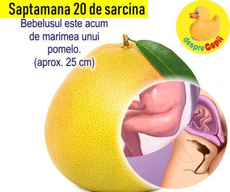 Saptamana 20 de sarcina