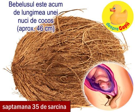 Saptamana 35 de sarcina