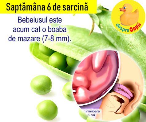 Saptamana 6 de sarcina
