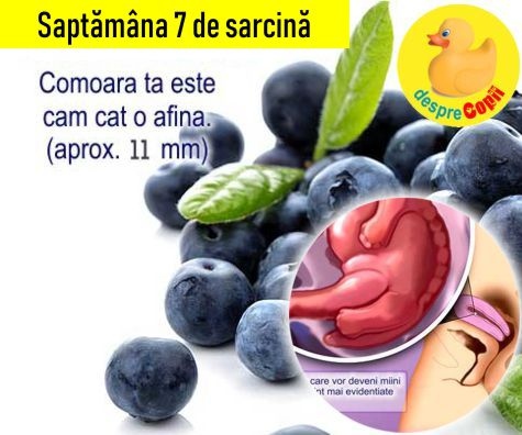 Saptamana 7 de sarcina