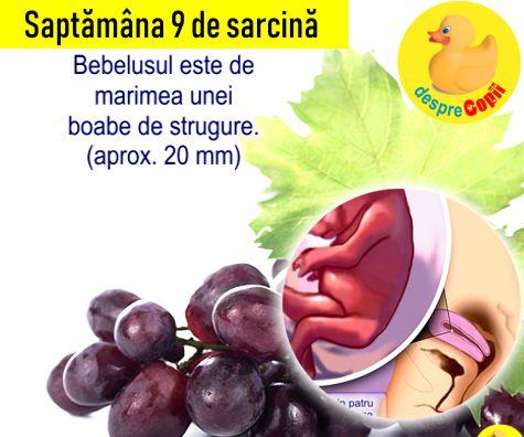 Saptamana 9 de sarcina