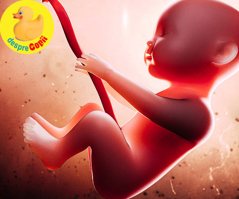 Emotiile bebelusului in burtica mamei - vezi cum incepe sa isi manifeste bucuria sau tristetea