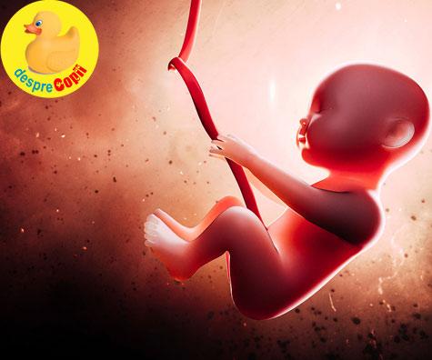 Minunea vietii din uterul unei femei. Iata cum are loc dezvoltarea sarcinii in cele 40 de saptamani de sarcina