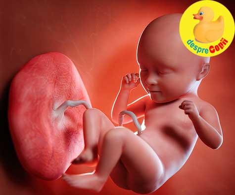 Stadii de imbatranire ale placentei