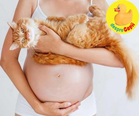 Toxoplasmoza si sarcina: simptome, riscuri si reguli