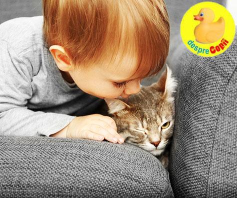 Parazitii intestinali ai animalelor de companie pot fi transmisi copilului