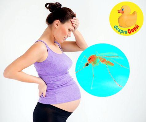 Virusul Zika: intrebari si raspunsuri importante pentru sarcina si sanatatea bebelusului